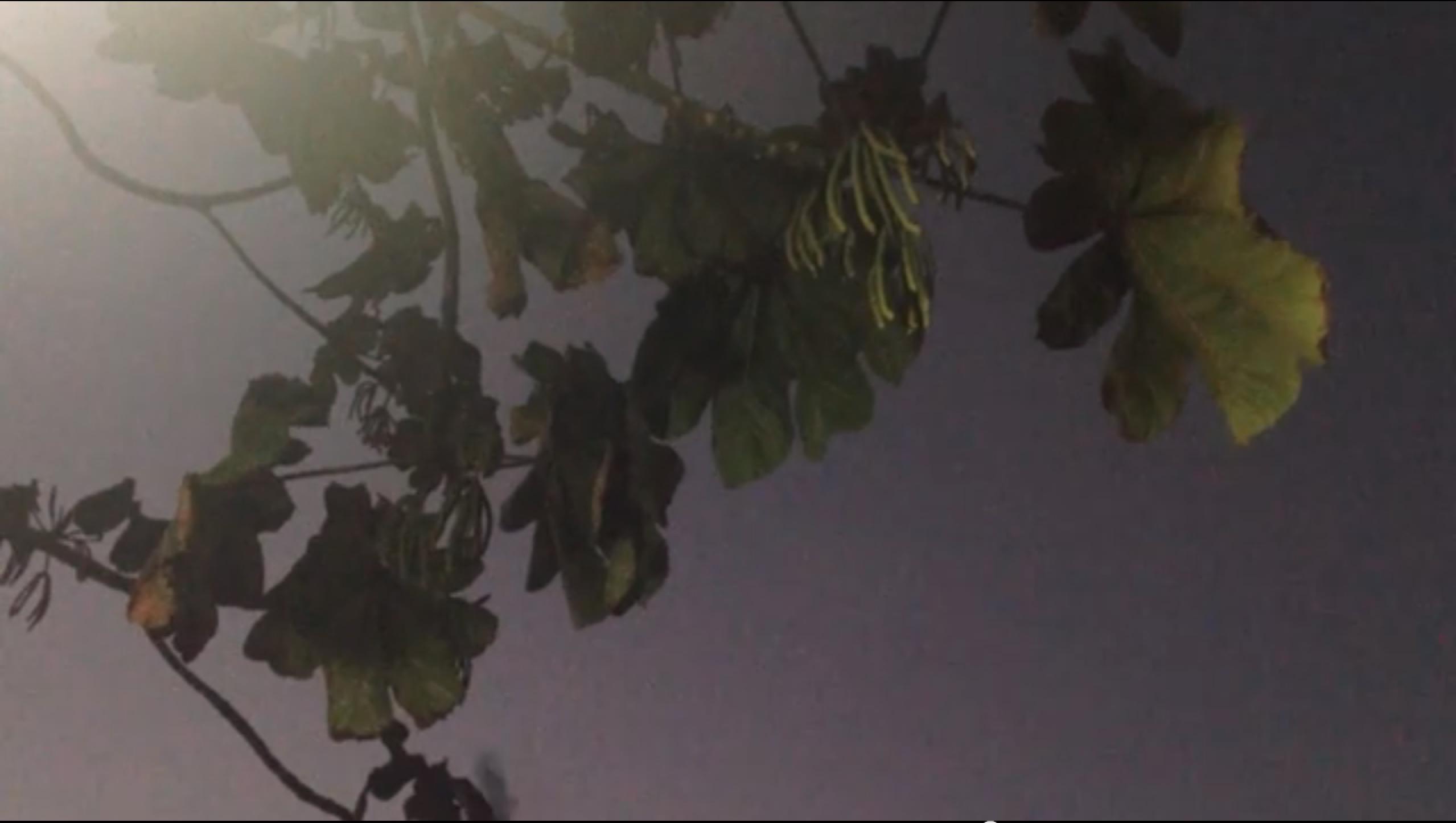 Screen Shot 2015-01-22 at 11.04.54 PM